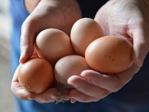 The Chicken and the Egg: Golden State, Hampton Creek and the IoT at #DF15