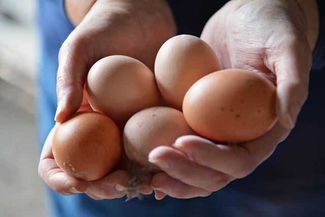 Chicken and egg dilemma